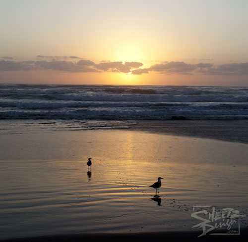 Seaguls on the Beach at Sunrise